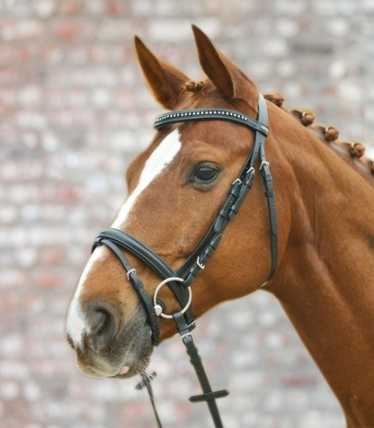 Trensenzaum Silverstar engl.komb. schwarz Pony