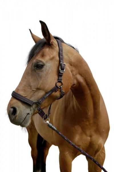 Halfter für GoLeyGosystem 2.0 schwarz/fuchsia Pony
