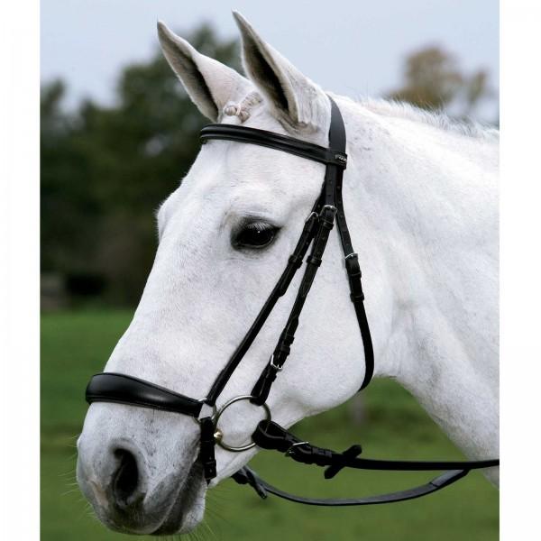 Star Trense Hannover schwarz pony